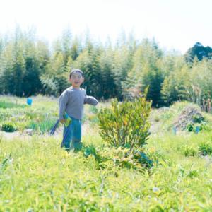 子供は季節ごとに遊びを変えていく(里山草刈まさこ)