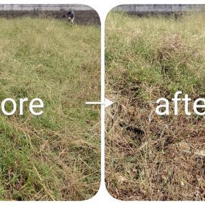 雑草問題:今日も朝から草刈り