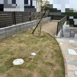 疑問解決!引き渡し前の芝生やタマリュウへの水やりについて