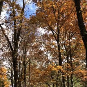 【グレートスモーキーマウンテンで紅葉を楽しむ】人気の紅葉ハイキングスポットCades Coveで癒された日