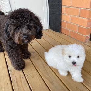 生後9週の子犬ちゃん❤️