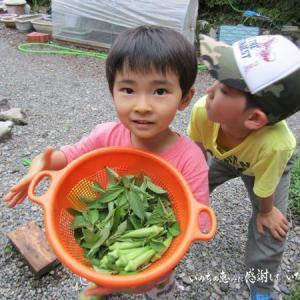 大変だけどやり甲斐いっぱい♡夏野菜から秋冬野菜への移行期