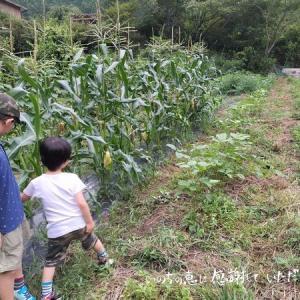 無農薬・有機肥料栽培の友人の畑を見学♪