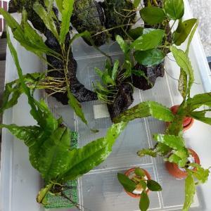 水草栽培水槽