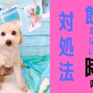 【軽井沢へお出掛けした時の実体験】愛犬が水を飲まない時の対処法