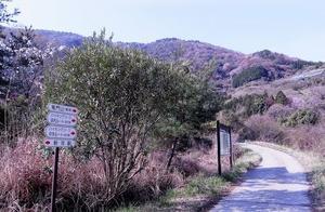 絶滅した和歌山・龍門山のギフチョウ