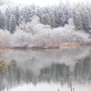 雪とカモシカ