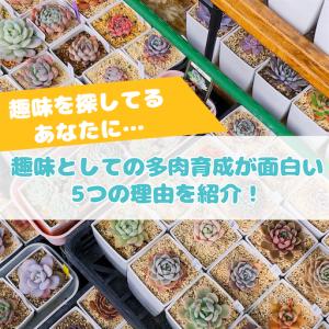 たにログ277 【趣味】多肉育成・タニラーが趣味としてオススメできる5つの理由!