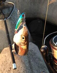 今日の釣りその2