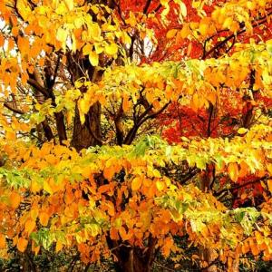 「絶妙のグラデーション=紅葉」生き物語―自然は尋常ではない64話