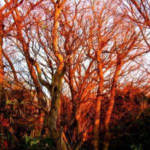 「赤い木木」生き物語 自然は尋常ではない70話
