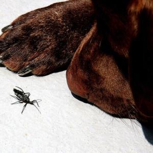 カミキリ虫と武蔵(我が最愛のラブラドール)生き物語ー自然は尋常ではない!108話