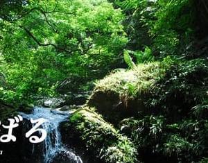 26日、奄美・沖縄の世界自然遺産の登録を決定