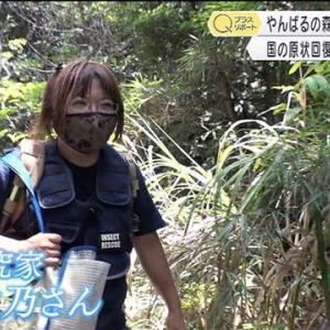 やんばるの森に残された米軍廃棄物・昆虫研究家 宮城秋乃さんの闘い