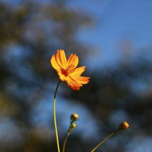 名残りの花たち