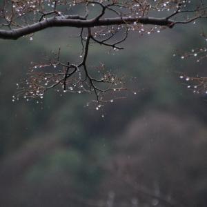 雨・雨・雨・三日目