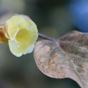 花の囁きを