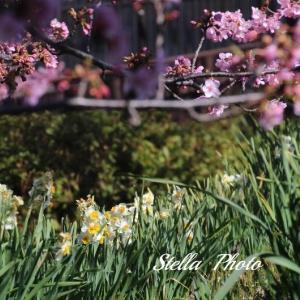 春・いろいろ