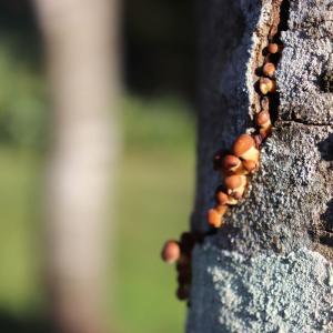 Tree(樹木)