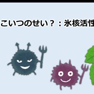 【vol.6】綺麗な霜はこいつのせい?:氷核活性細菌