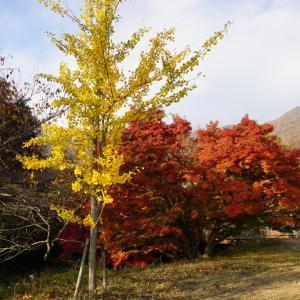 紅葉キャンプ♪