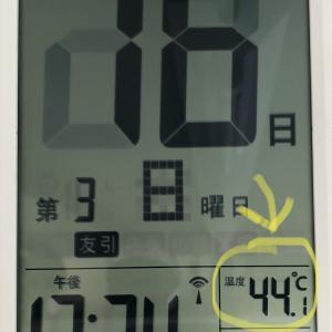 酷暑でございます
