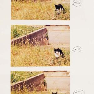 ねこねこ日記①2001.10.4