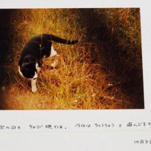 ねこねこ日記①2001.10.5