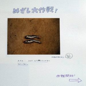 ねこねこ日記①2001.10.27