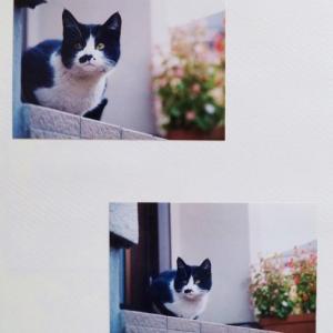 ねこねこ日記②2001.11.28