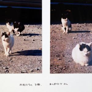 ねこねこ日記③2001.12.20