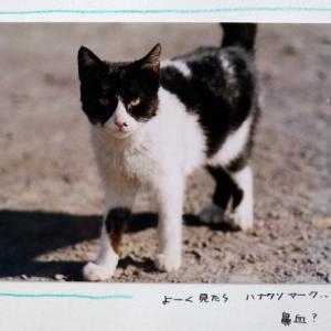 ねこねこ日記③2001.12.24