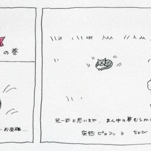ねこねこ日記③某日