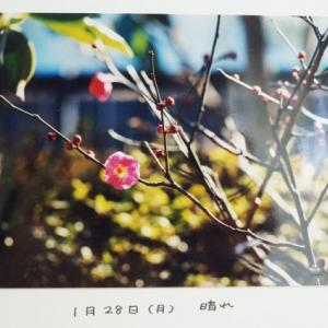 ねこねこ日記④2002.1.28
