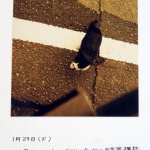 ねこねこ日記④2002.1.29