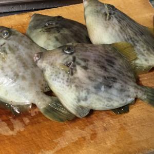 これぞ釣り師の特権‼️カワハギの贅沢食い