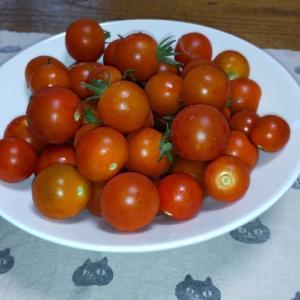 昭和こぼれ話13  「トマトの値段」
