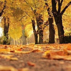 季節はもう秋
