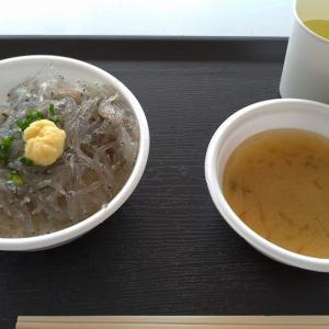 【静岡】漁港と生しらす丼!用宗一人旅