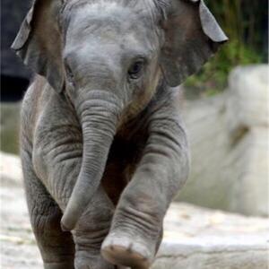 まただ象!