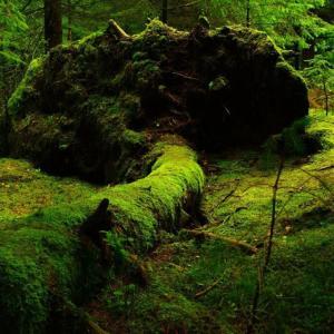 【ジミコツの森】毎朝やってる誰にも見えないアレ