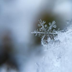 雪が降った!