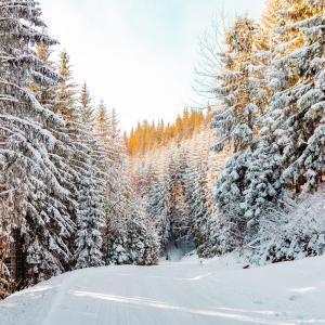 冬らしくなってきたスウェーデン