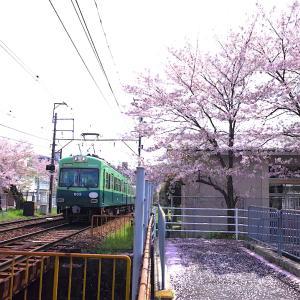 おけいはんと桜並木