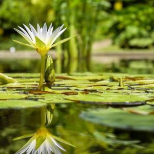 九州大学の遺体は誰?身元は?ため池で成人男性発見が恐怖でしかない