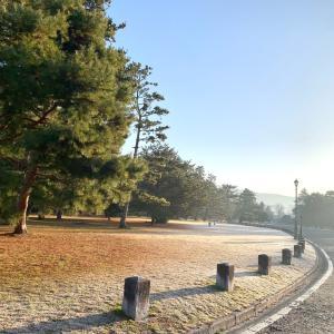 朝の京都御苑*霜がきれい*