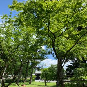 京都御苑で7時間遊んだ