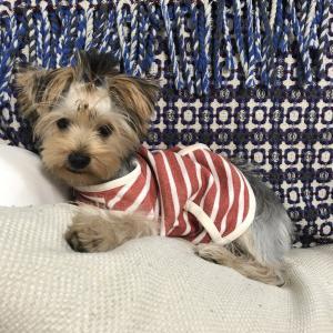 ぴりか日記:チーちゃんのお洋服を貰いました。
