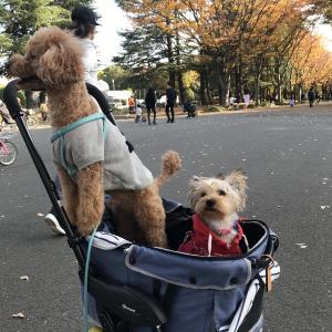 ぴりか日記:駒沢公園ドッグランに行ってきました❗️
