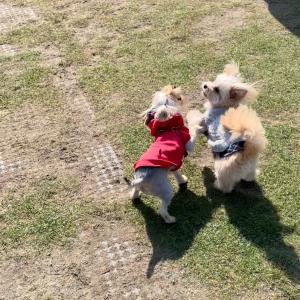 ぴりか日記:新横浜公園ドッグランに行きました!(2)